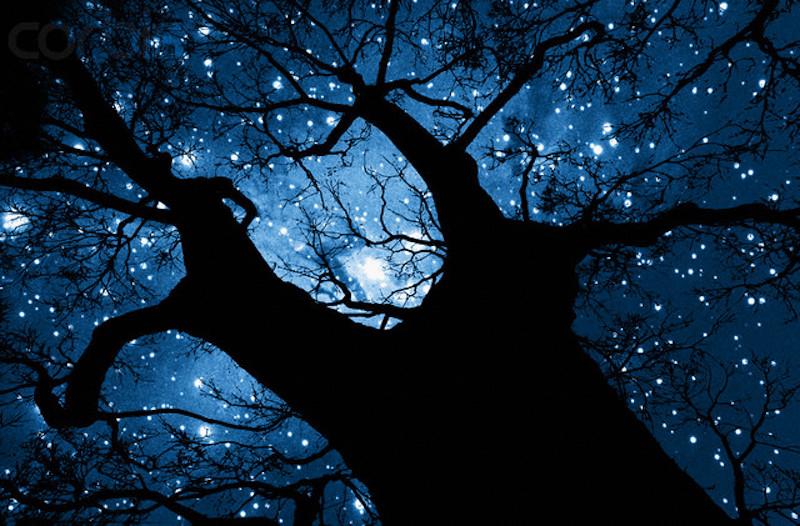 Tree Silhouette Against Starry Night Sky --- Image by © Robert Llewellyn/Corbis